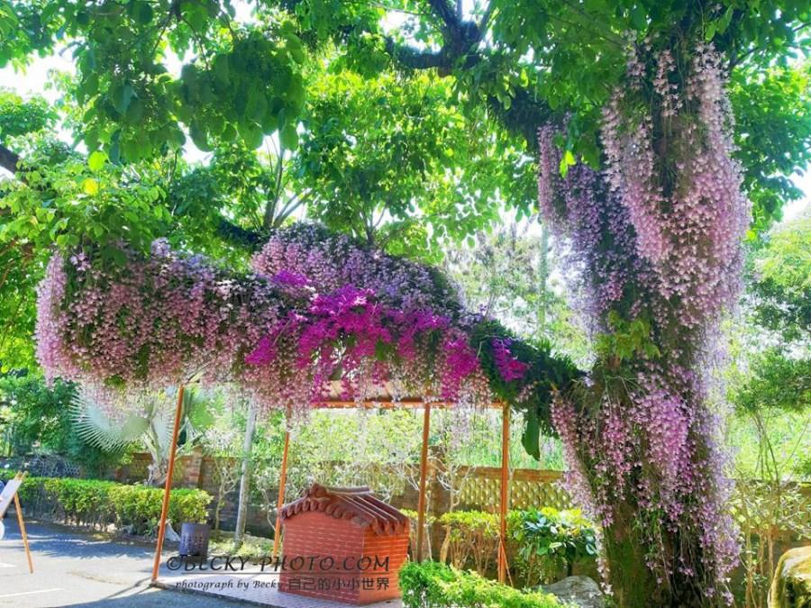【高雄】。南部拍花行程:高雄美濃湖花旗木+嘉義粉色瀑布石斛蘭