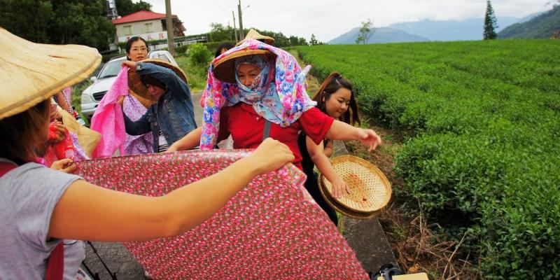 【台東】。找回遺忘的旅程~體驗鹿野採茶樂趣......變裝成採茶姑娘