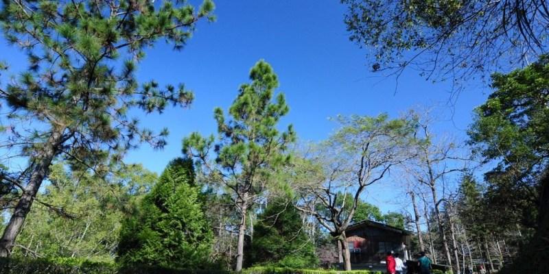 【台中】。東勢林場賞櫻季