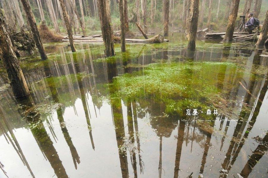 【南投】。尋找忘憂森林~