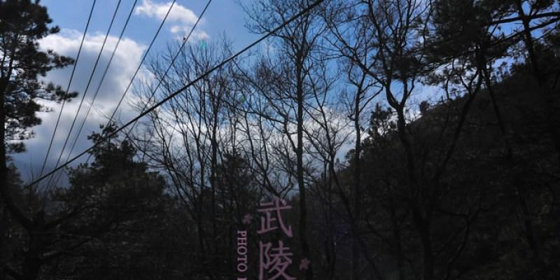【台中】不用去日本看櫻花了....武陵農場の粉紅櫻花