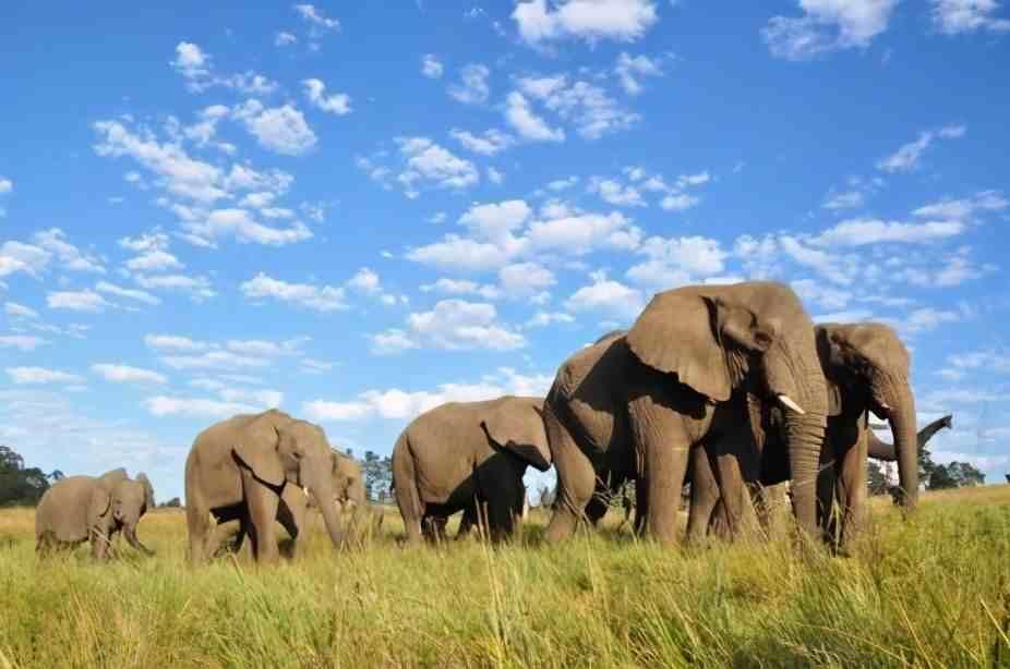 大象怀孕多长时间生小象(大象一般怀孕多久才能生下一个象宝宝 )插图
