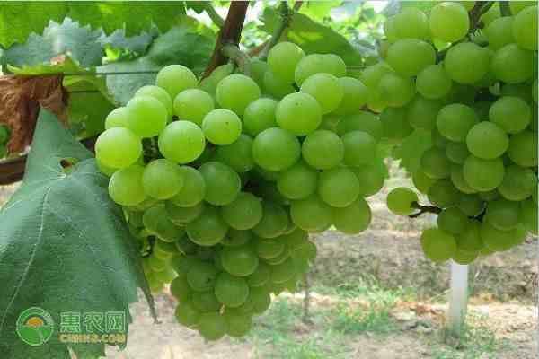 秋天成熟的水果有什么?秋天吃水果有哪些禁忌?