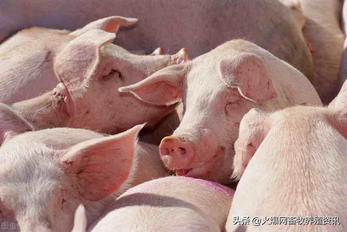 猪流感临床特征有哪些?猪流感该如何防治?