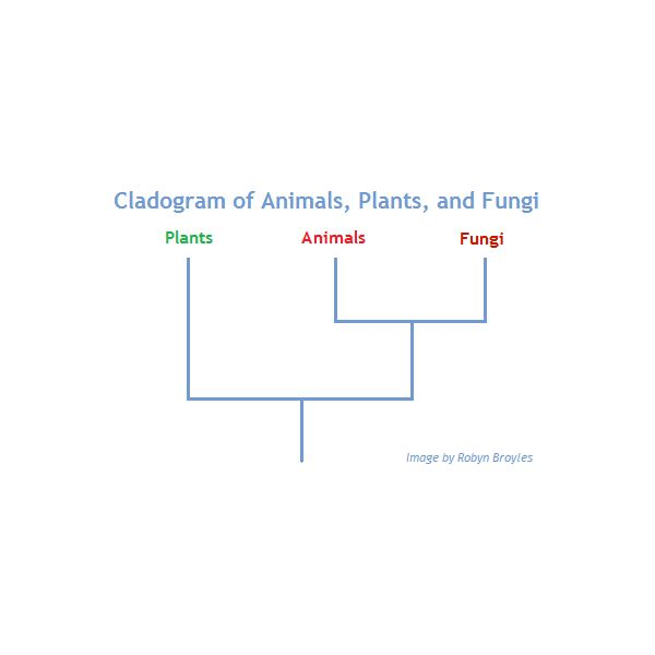 Plant And Animal Cell Venn Diagram Differences