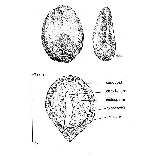 The Parts of a Seed Homework Help: The Seed Coat