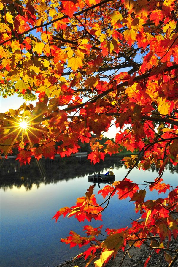 Autumn Tree Leaf Fall Animated Wallpaper Image Gallery Of Autumn Photography