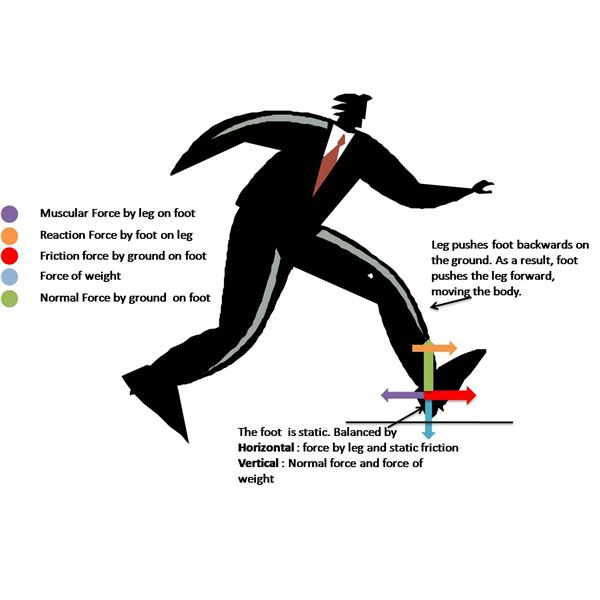 Application of Newton's Laws in Walking Including a Free