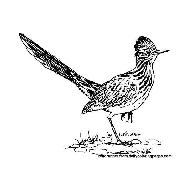 Fantastic Bird Coloring Sheets for Kids or Decorative Purposes