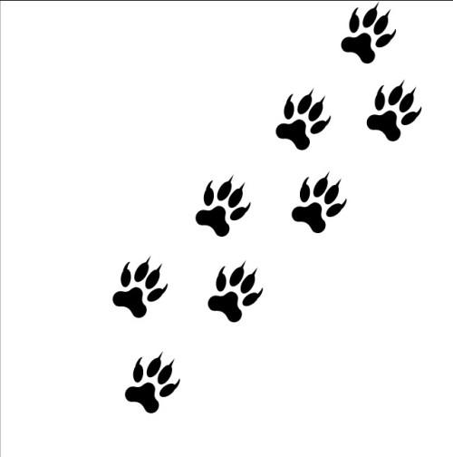 cat tiger lion paw