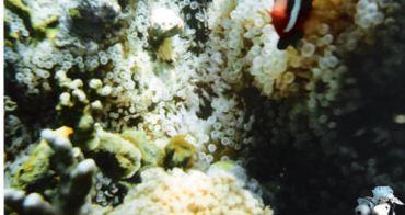 2007.10帛琉 水底相機篇