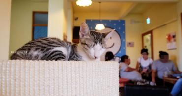 台中南屯│浪浪別哭-黎明新村裡的流浪動物中途餐廳.可愛毛小孩陪你下午茶