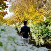 台中新社│沐心泉休閒農場-黃金楓和白雪木交織唯美浪漫,被迷人的金黃雪白美景包圍
