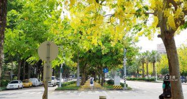 台中南區│中興大學興大路阿勃勒-盛開一串串黃澄澄耀眼的阿勃勒小風鈴,夏日浪漫美景