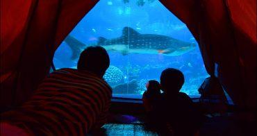 最夯的海底露營,夜宿鯨鯊館新玩法 | 珠海長隆海洋王國三日遊,睡在帳篷內看著鯨鯊從眼前游過,獨享世界最大鯨鯊水族館