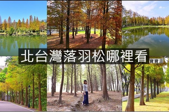 北台灣落羽松景點懶人包   台北、桃園、新竹、宜蘭落羽松秘境資訊一次打包