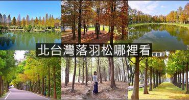 北台灣落羽松景點懶人包 | 台北、桃園、新竹、宜蘭落羽松秘境資訊一次打包