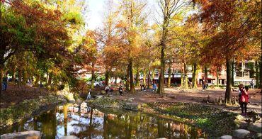 宜蘭 | 羅東運動公園落羽松正紅,最好親近的落羽松公園,拍下公園一年中最美的時刻