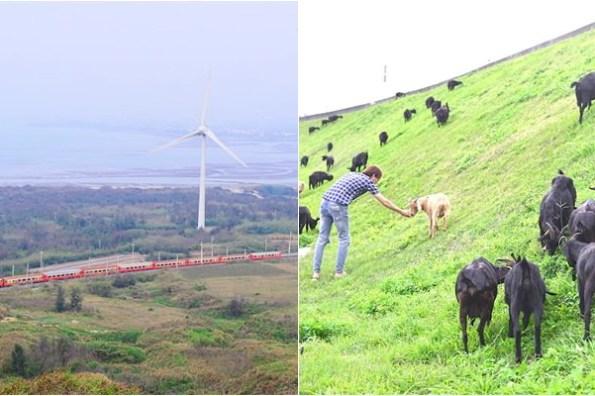 苗栗好望角 | 後龍一日遊必玩,轉角遇見放牧羊群,免費餵羊