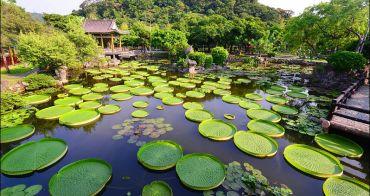 台北夢幻庭園免費看 | 雙溪公園,大王蓮季開跑,7~9月最佳觀賞期,還可免費乘坐