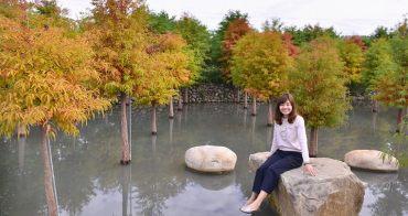 台中落羽松》后里泰安落羽松,新種植的水漾落羽松更美,泰安國小落羽松秘境