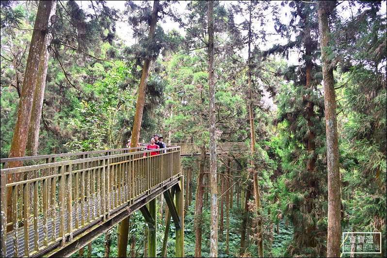 溪頭森林遊樂區 彙整 - 寶寶溫旅行親子生活