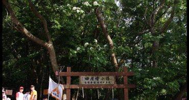 [ 遊記 ] 苗栗三義桐花之旅--四月雪小徑