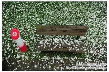 [ 苗栗賞桐去]  苗栗銅鑼--桐花樂活主題公園