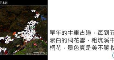 [ 遊記 ] 桃園龍潭--小粗坑古道桐花遊