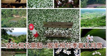 [ 客家桐花季 ] 全台賞桐景點介紹~跟著寶寶溫追五月雪去
