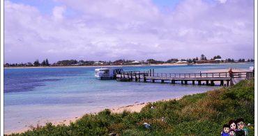 《 澳洲伯斯 》Perth Penguin Island 企鵝島