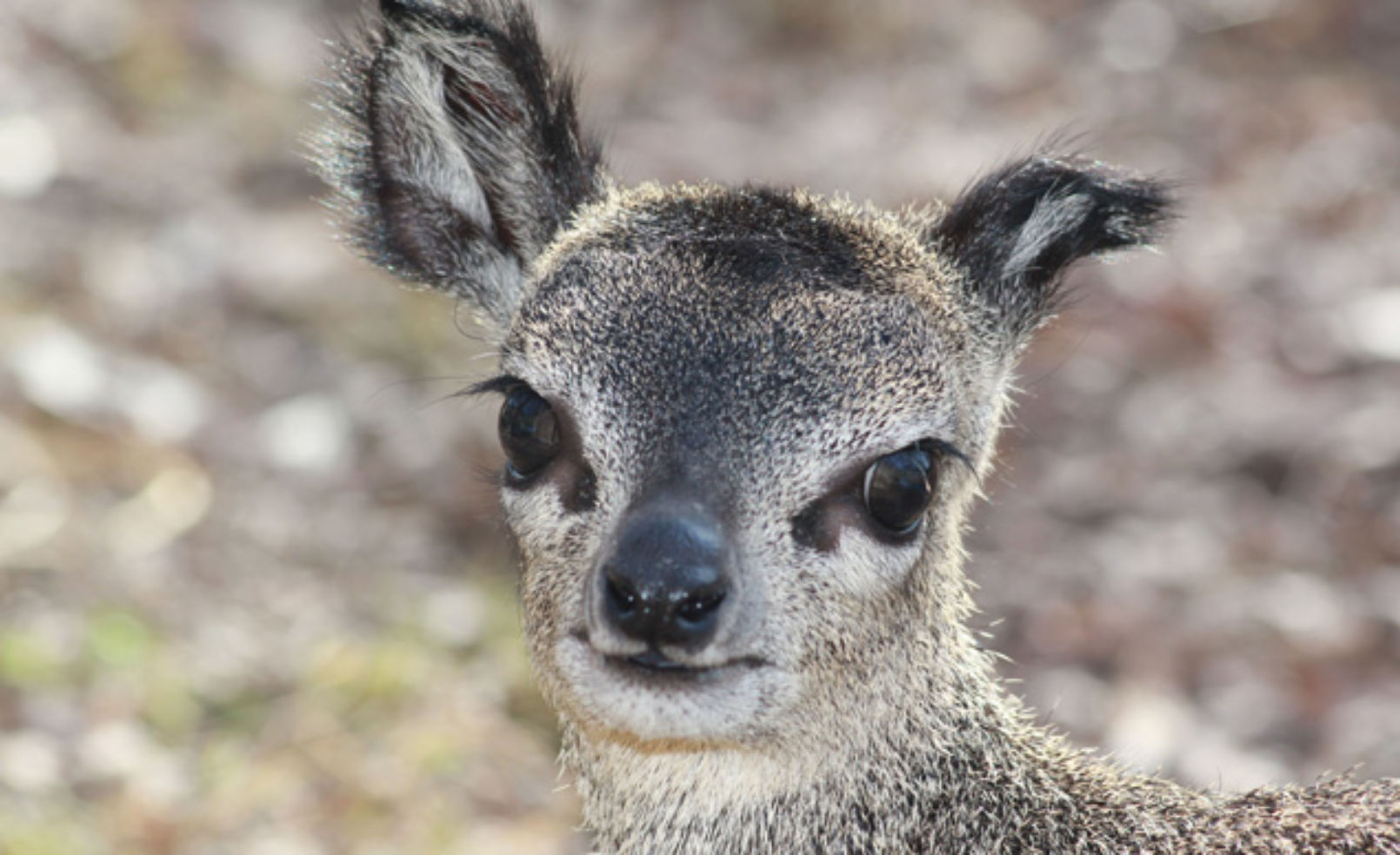 Adorable Zoo Animals You MUST See Budget Travel