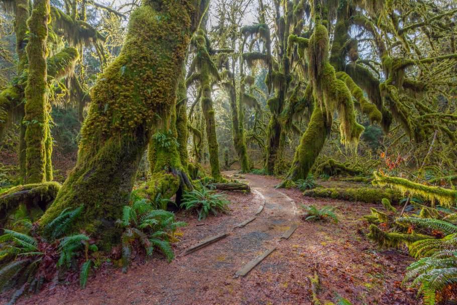 The-Hoh-Rainforest-on-the-Olmpic-Peninsula_0.jpg?mtime=20200115144133#asset:107708
