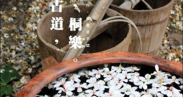『彰化桐花季』桐花、桐樂,芬園挑水古道賞桐花趣。