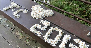 『油桐花』2013土城桐花季,美麗桐花飄飄落。