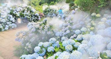 竹子湖繡球花季 | 花與樹夢幻系繡球花田,迷霧仙境繡球花小徑好迷人~