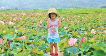 新北牡丹蓮花季 | 金山清水農地蓮花大盛開,百坪牡丹蓮花田免費拍照超幸福~