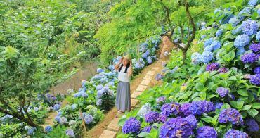 南庄繡球花季 | 杉林松境農場繽紛繡球花齊放!超好拍花草秘境~