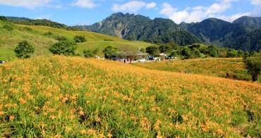 花蓮金針花季》六十石山金針花海,來看最美金色大地花毯,一期一會美到像仙境。