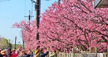 台北櫻花季》2019平菁街42巷櫻花,美拍粉嫩櫻花,櫻花巷浪漫櫻花盛開中~