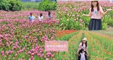彰化景點》夏天最美花朵在彰化,溪州粉紅薑荷花海、漸層雞冠花迷宮,放假一起賞花趣~