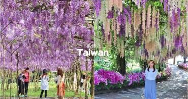 紫藤花季》就是愛紫藤花!全台5個熱門美拍紫藤花場景公開,追逐夢幻花廊從現在開始!