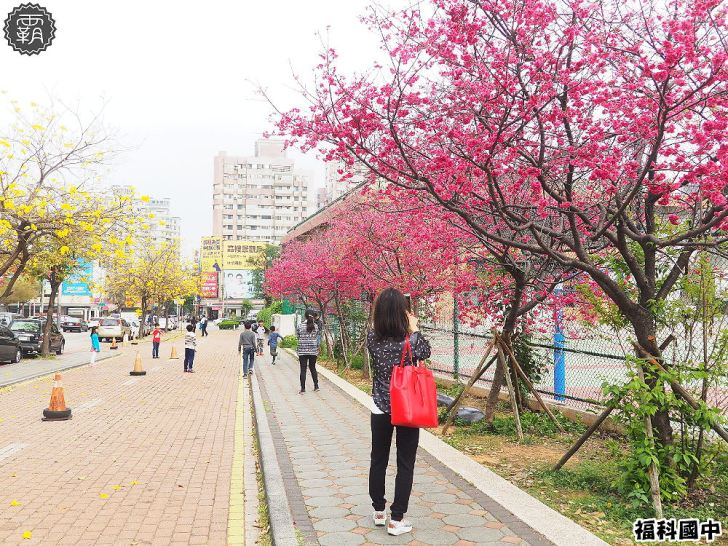 20180307230823 79 - 一次能捕捉到盛開的櫻花與黃花風鈴木耶~市區內賞花小確幸~
