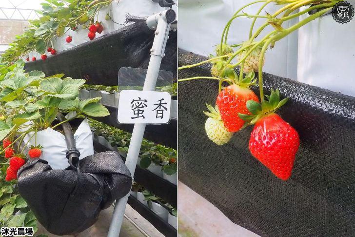 20190405214832 21 - 白草莓、水蜜桃草莓好特別!沐光農場,溫室高架草莓園,採草莓超舒適!