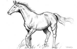 horse draw easy sketch drawing amazing awesome drawings pencil hack google animal steps three buzzfeed