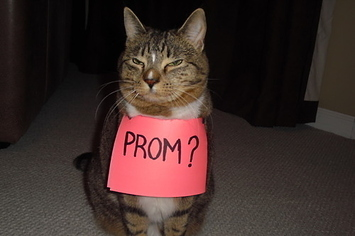 24 Creative Ways To Ask Someone To Prom & Prom Gifts For Her - Arenda-stroy
