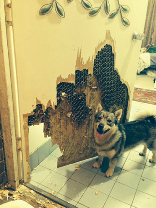These dogs who sought revenge and showed absolutely no remorse.