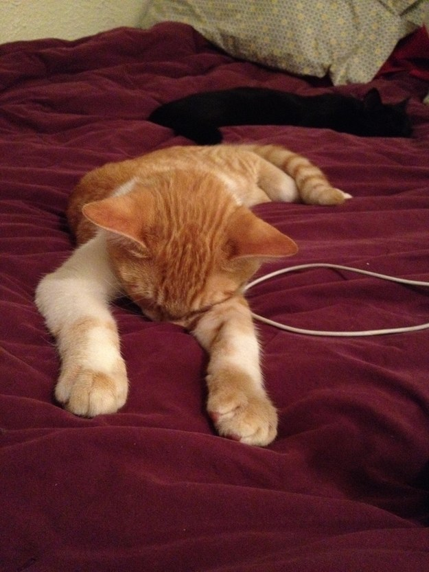 Does getting through round after round of meetings, calls and reports make you feel like this cat?
