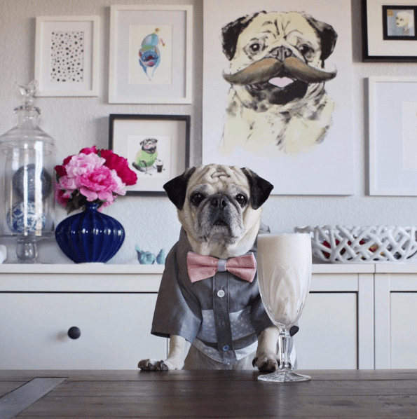 """Rocco's owner, Lili, spoke to BuzzFeed about her boozy pup. """"It's his insatiable appetite for treats and attention that drove it."""""""