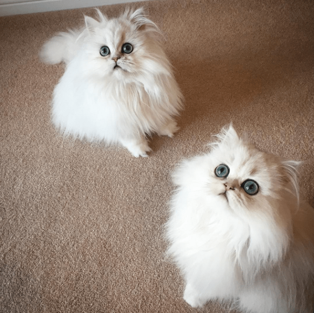 So blue-eyed and fluffy, in fact, THEY'VE GOT TO BE FAKE.